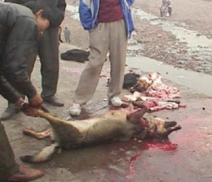a_Asien_dog-meat_21